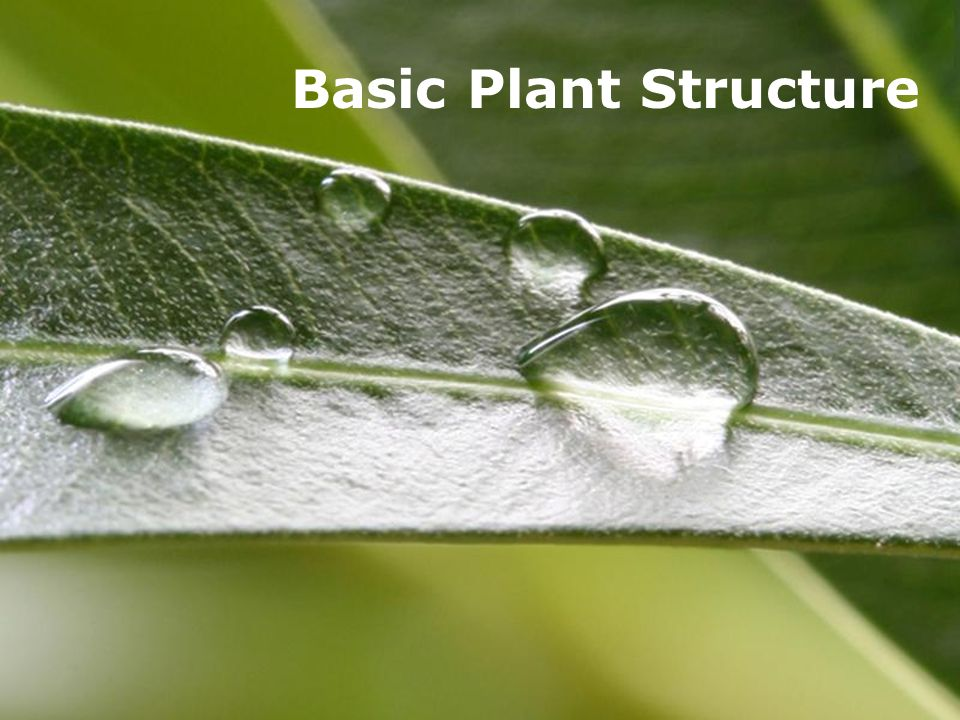 Powerpoint TemplatesPage 1Powerpoint Templates Basic Plant Structure