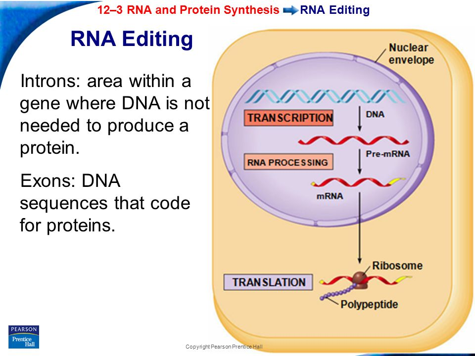 labpaq dna and protien synthesis Phenotype and genotype labpaq pdf books bellow will give you all related to phenotype and genotype labpaq report 12: from dna to protein: protein synthesis.