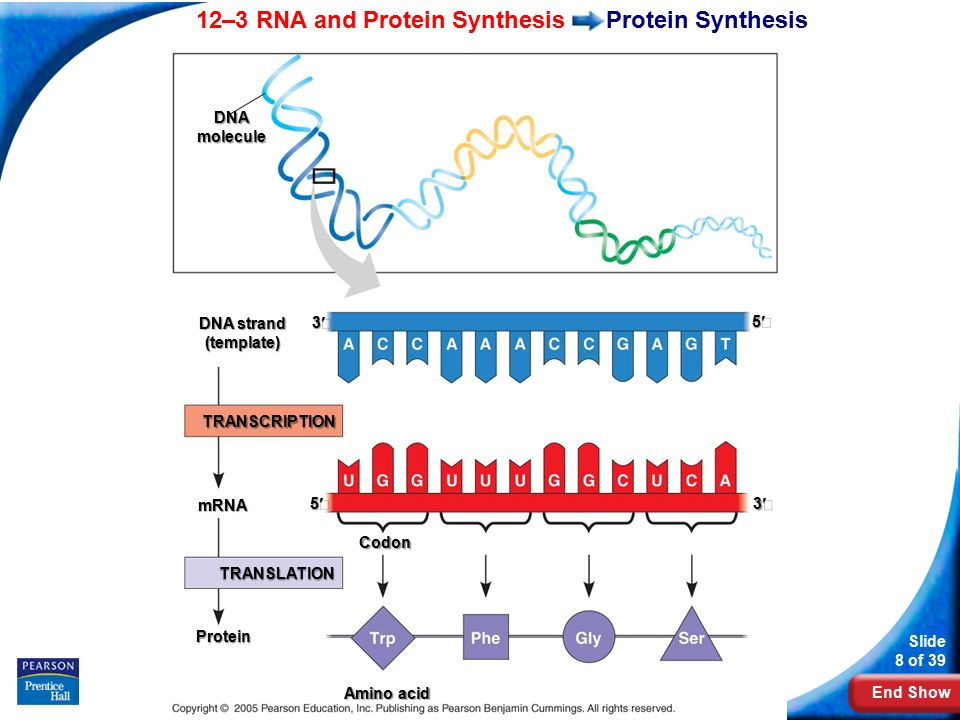 labpaq dna and protien synthesis