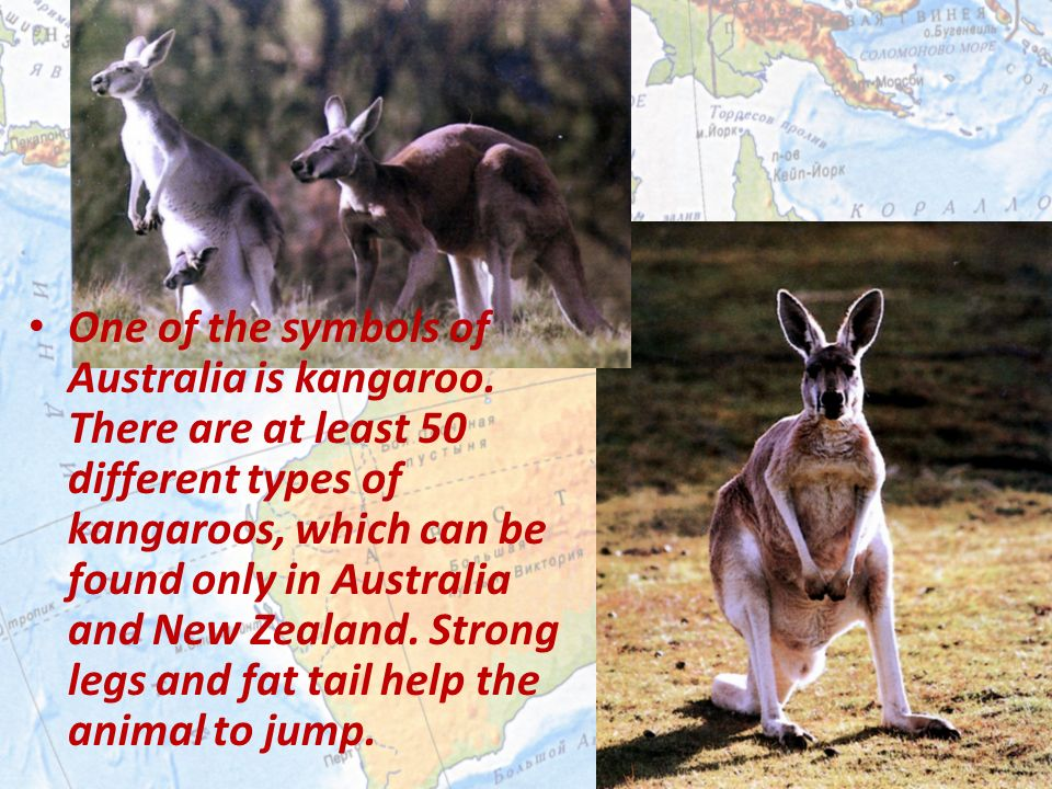 One Of The Symbols Of Australia Is Kangaroo There Are At Least 50