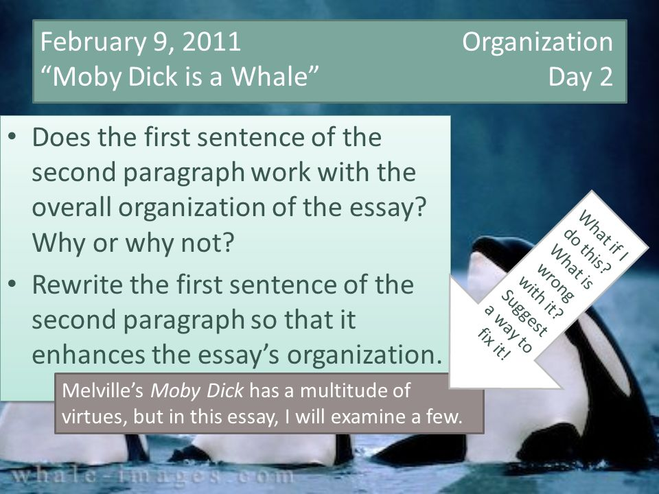 I need 6-8 quotes from nickeled and dimed that would be helpful in writing an essay!!?