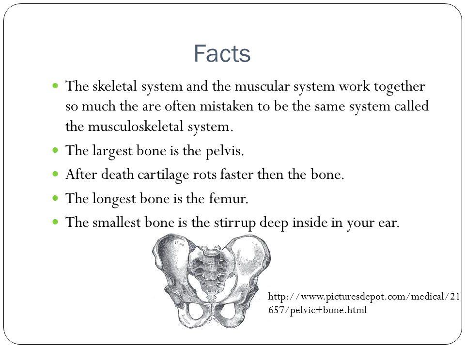 piper spaulding skeletal system. functions of the skeletal system, Muscles