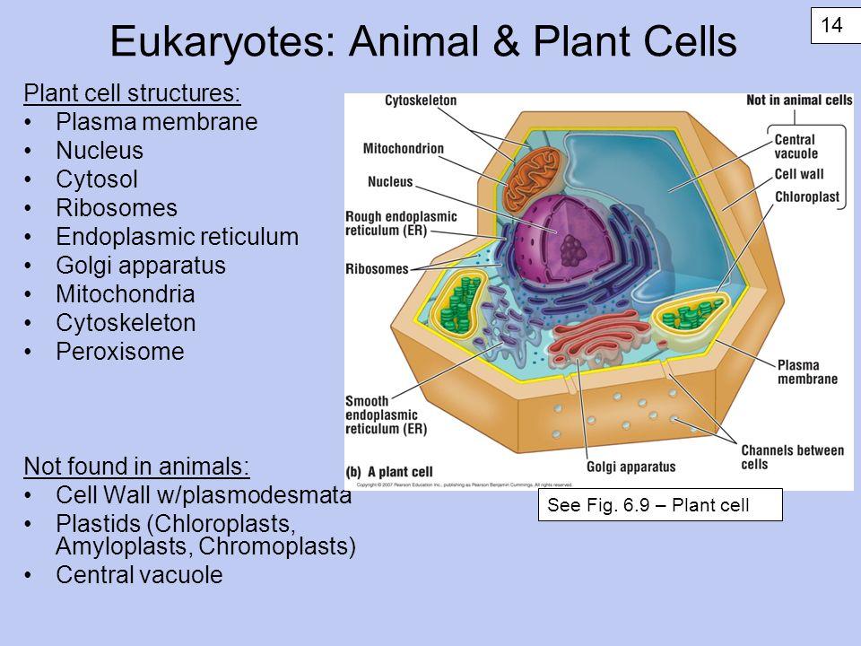 the structure of endoplasmic reticulum