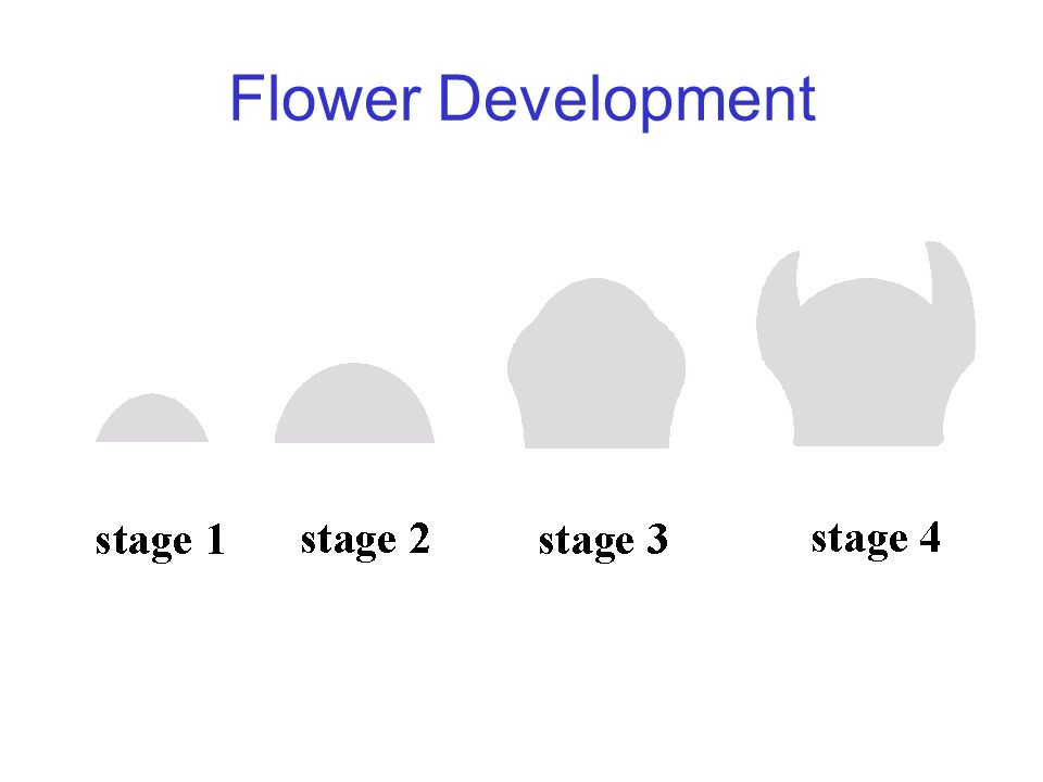 Flower Development