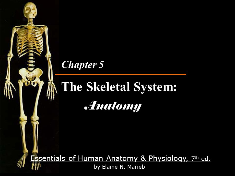 Essentials Of Human Anatomy Physiology 7 Th Ed By Elaine N