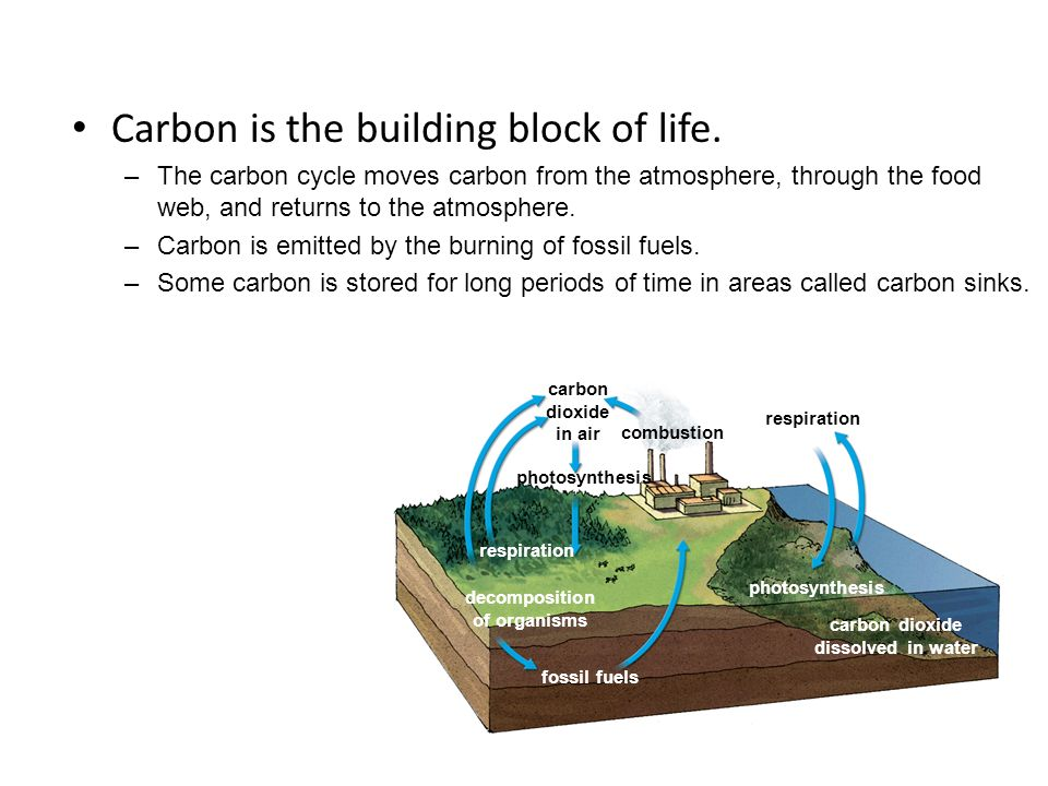fossil fuels photosynthesis carbon dioxide dissolved in water decomposition of organisms respiration carbon dioxide in air photosynthesis combustion respiration Carbon is the building block of life.
