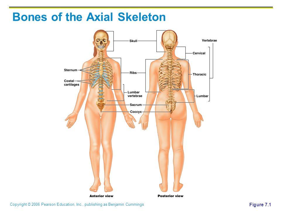 Gemütlich Pearson Anatomie Und Physiologie Zugangscode Ideen ...