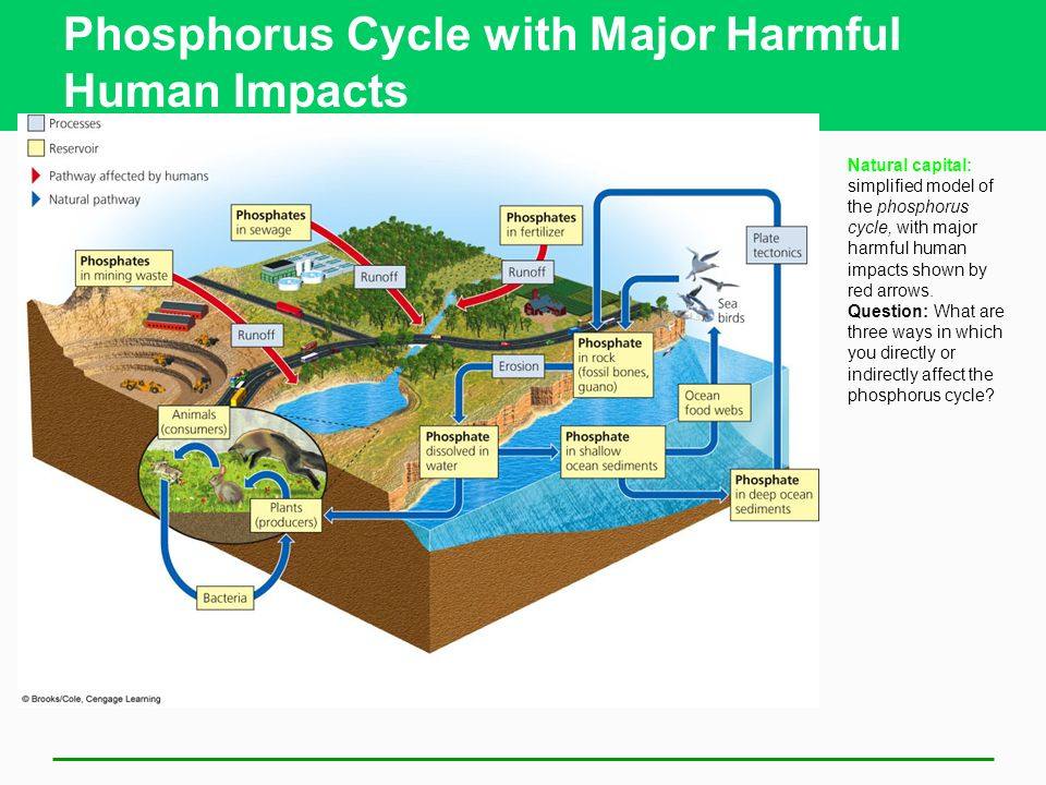 Ecosystems what are they and how do they work chapter ppt download phosphorus cycle with major harmful human impacts natural capital simplified model of the phosphorus cycle ccuart Image collections