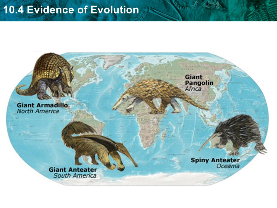 10.4 Evidence of Evolution