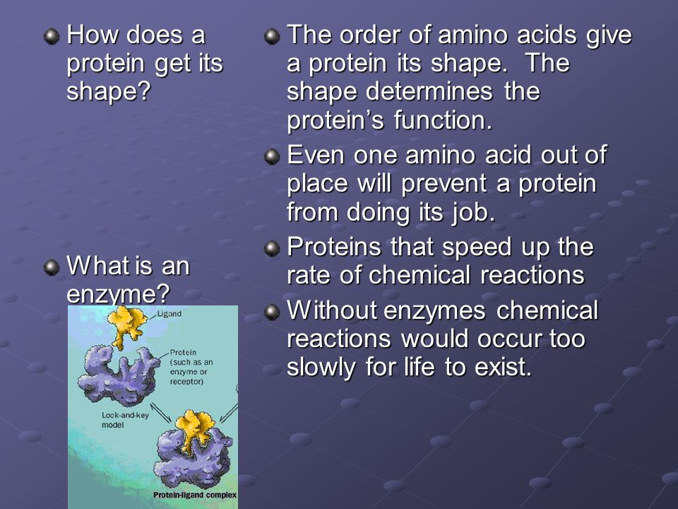 How does a protein get its shape. What is an enzyme.