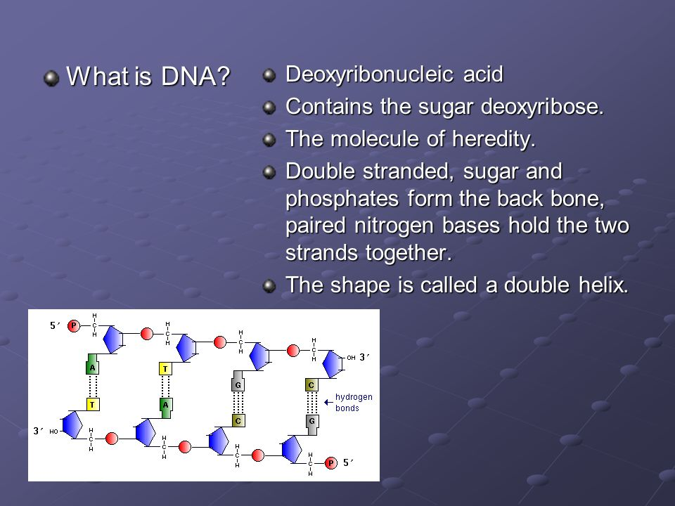 What is DNA. Deoxyribonucleic acid Contains the sugar deoxyribose.