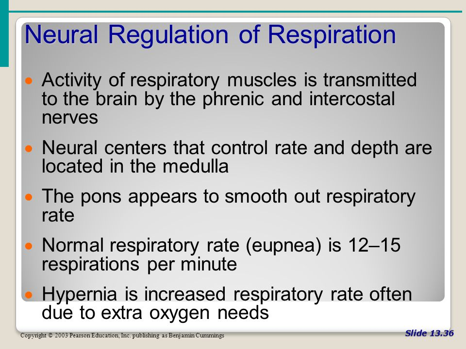 Slide Neural Regulation of Respiration Copyright © 2003 Pearson Education, Inc.