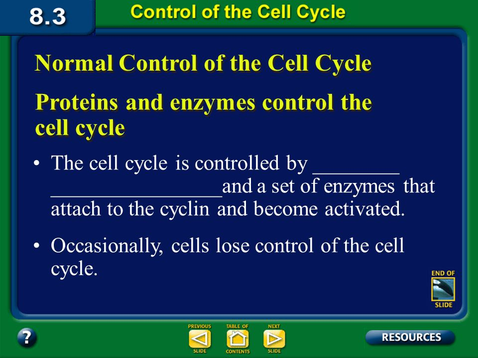 Section 3 Objectives – page 211 Section Objectives Describe the role of enzymes in the regulation of the cell cycle.