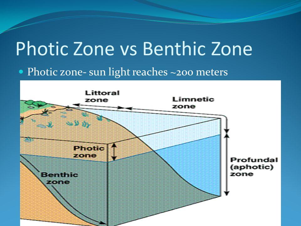 Photic Zone vs Benthic Zone Photic zone- sun light reaches ~200 meters