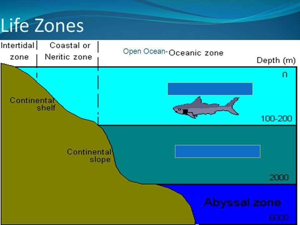 Life Zones Open Ocean-