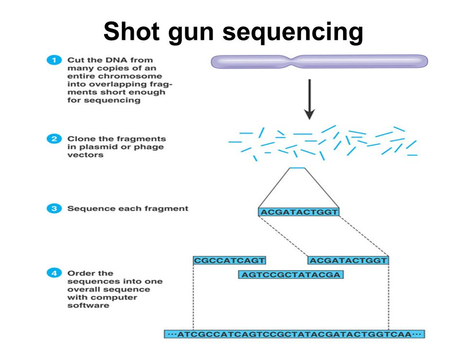 Shot gun sequencing
