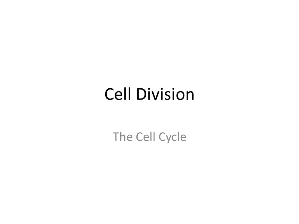 math worksheet : cell division the cell cycle cell cycle cell cycle regular  : Cell Growth And Division Worksheet