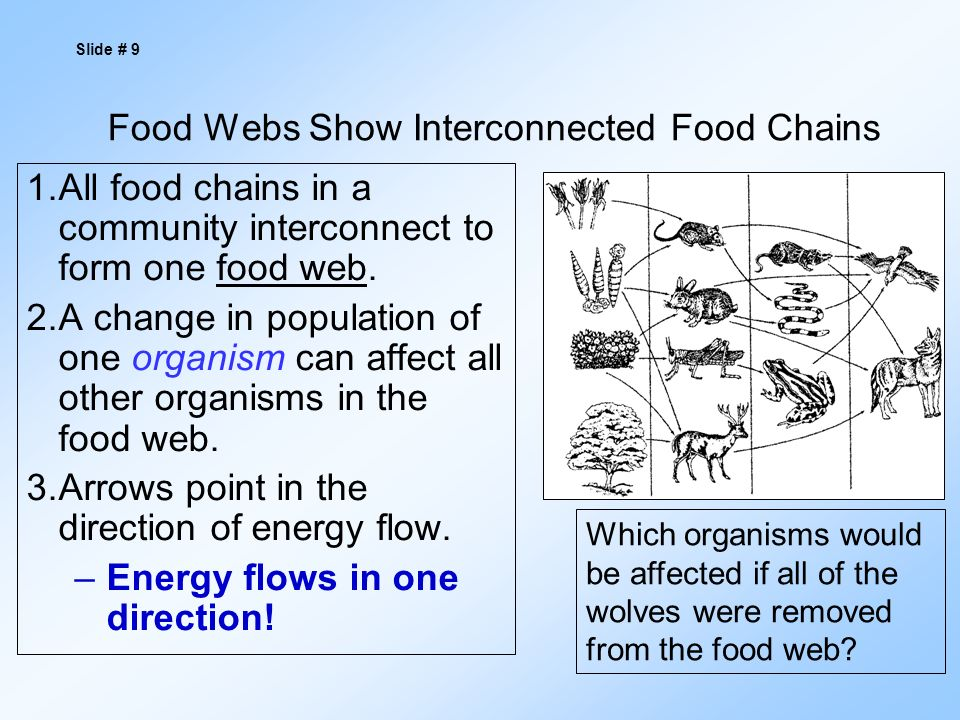 Food Webs Show Interconnected Food Chains 1.All food chains in a community interconnect to form one food web.