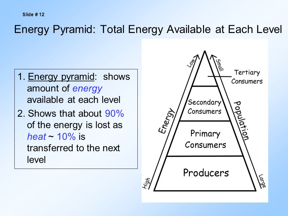 Energy Pyramid: Total Energy Available at Each Level 1.