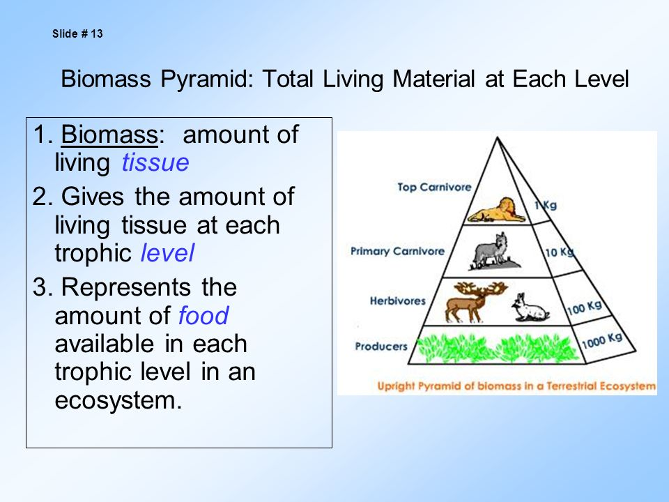 Biomass Pyramid: Total Living Material at Each Level 1.