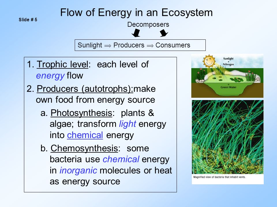 Flow of Energy in an Ecosystem 1. Trophic level: each level of energy flow 2.