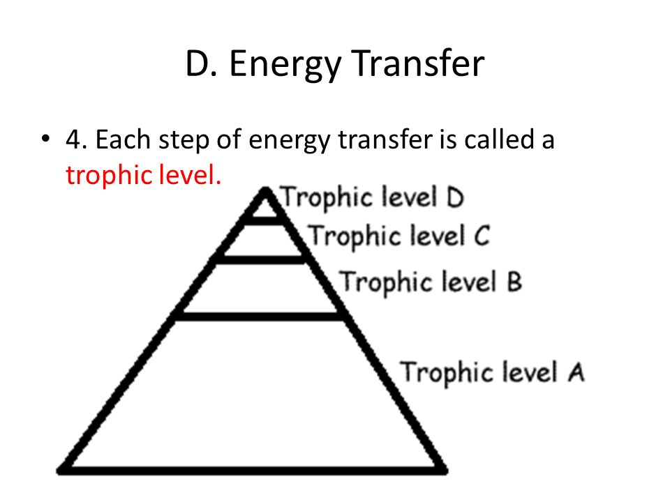 D. Energy Transfer 4. Each step of energy transfer is called a trophic level.