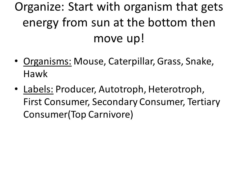 Organize: Start with organism that gets energy from sun at the bottom then move up.