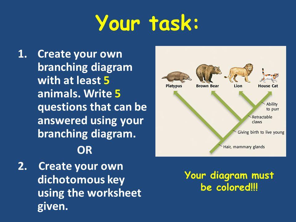 Branching Diagram Worksheet 100 Images Diagraming Evolution Or