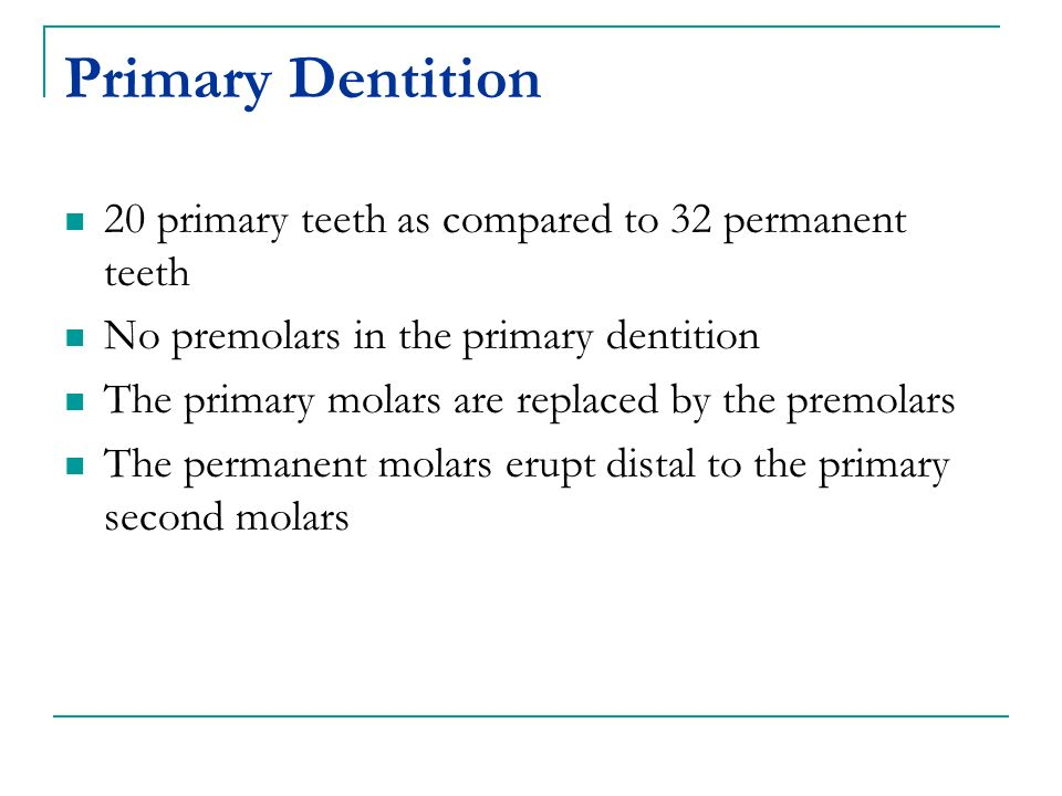 Primary Dentition 20 primary teeth as compared to 32 permanent teeth No premolars in the primary dentition The primary molars are replaced by the premolars The permanent molars erupt distal to the primary second molars