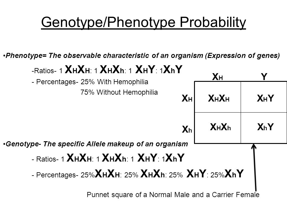 genotypes and phenotypes virtual lab Lab 9 – principles of genetic inheritance overview given the variety of possible genotypes and phenotypes for the offspring of any two parents, genetics.