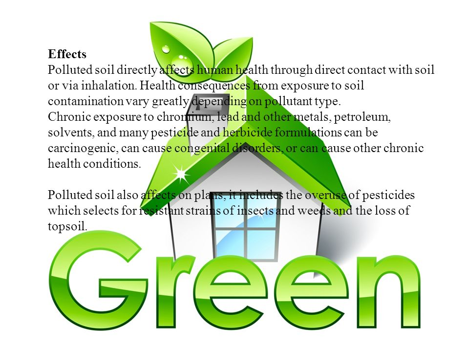 pollution affects the health of all living thing essay