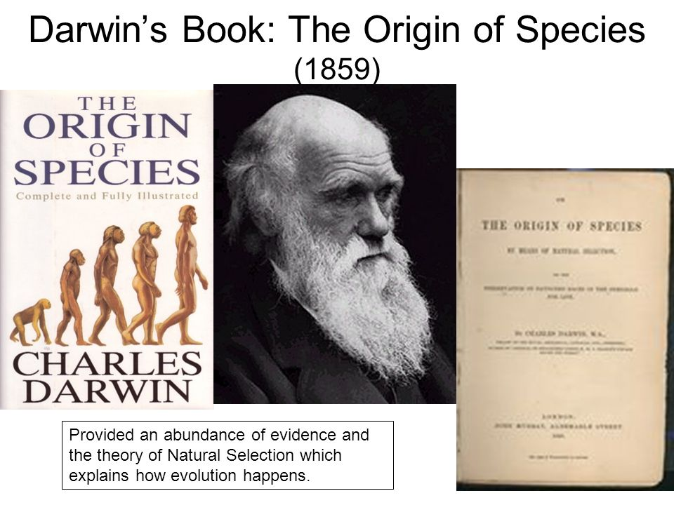 the theme of nature in charles darwins the origin of species Charles darwin: did he help create scientific racism the origin of species by means of natural selection  darkwhite wordpress theme by ruven.