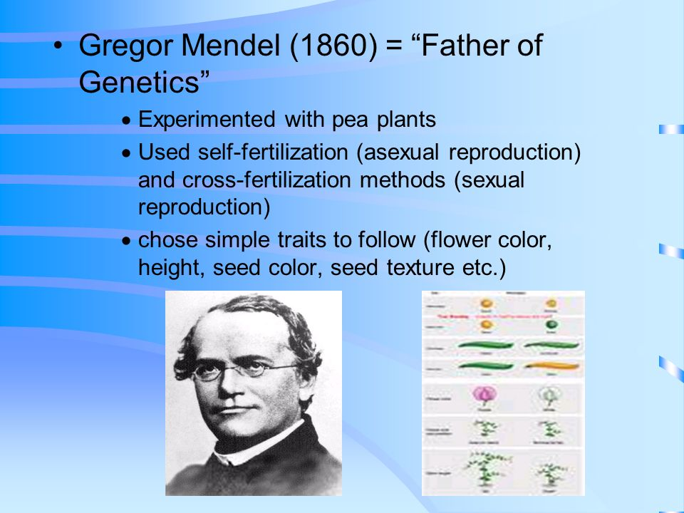 Genetics and Inheritance The Scientific Study of Genes and the Inheritance of Traits