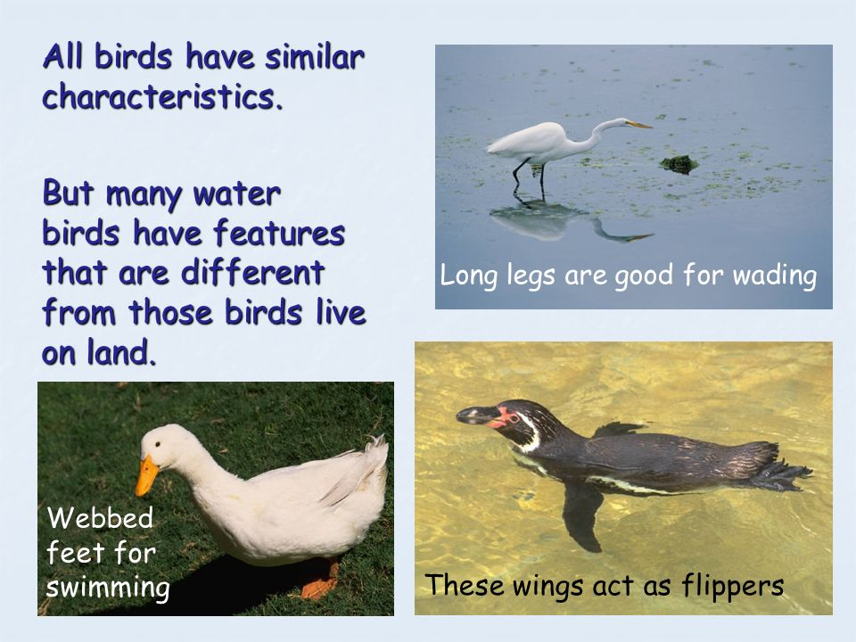 All birds have similar characteristics.