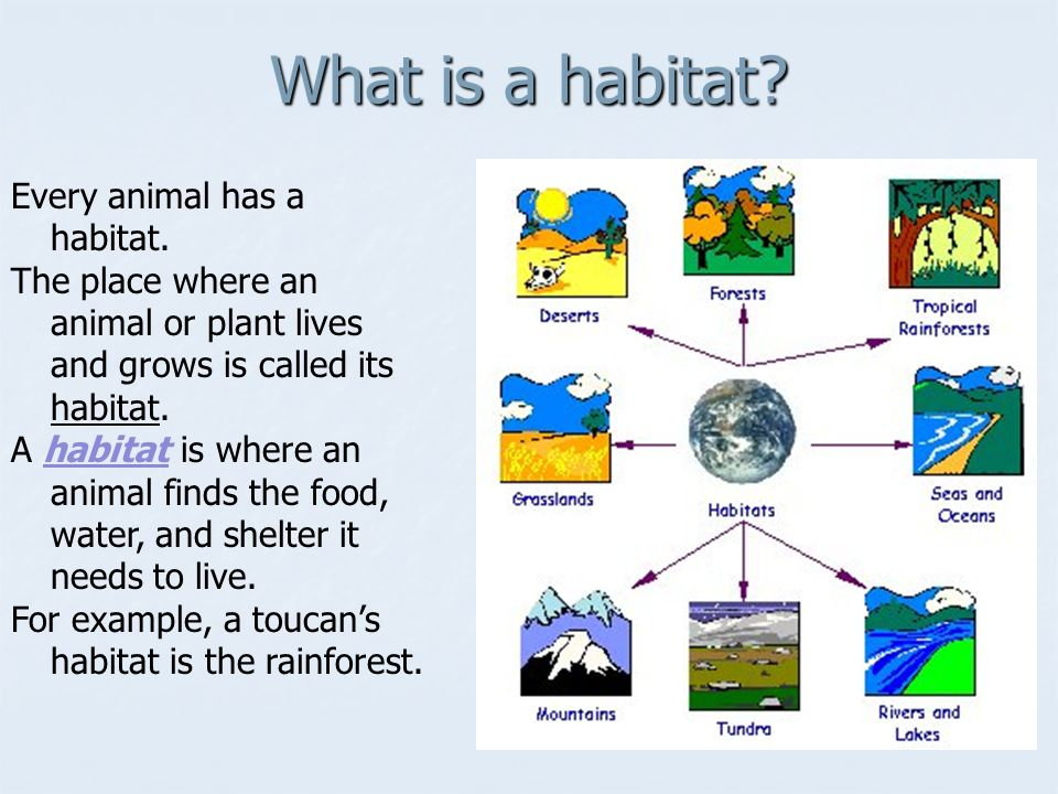 Every animal has a habitat.