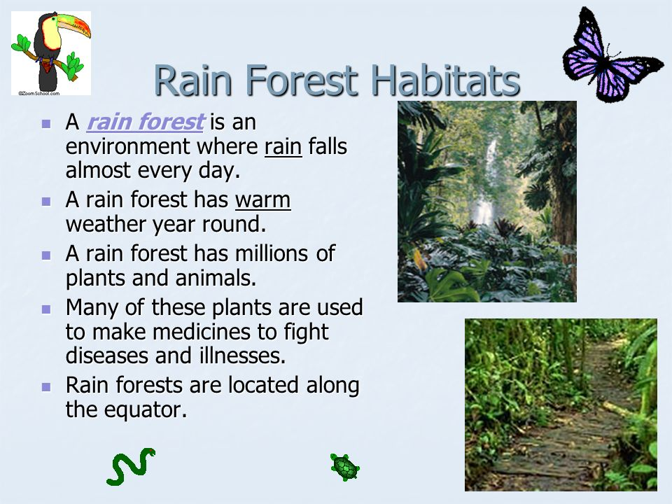 Rain Forest Habitats A rain forest is an environment where rain falls almost every day.