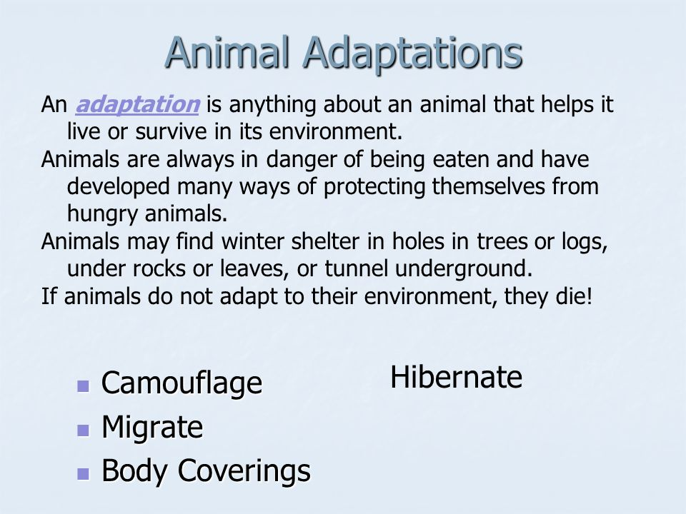 Animal Adaptations Camouflage Camouflage Migrate Migrate Body Coverings Body Coverings Hibernate An adaptation is anything about an animal that helps it live or survive in its environment.