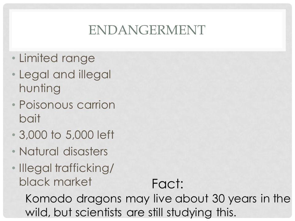 ENDANGERMENT Limited range Legal and illegal hunting Poisonous carrion bait 3,000 to 5,000 left Natural disasters Illegal trafficking/ black market Fact: Komodo dragons may live about 30 years in the wild, but scientists are still studying this.