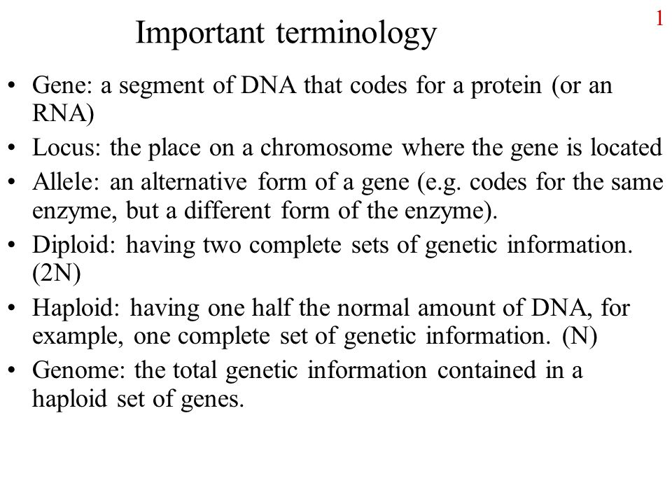 1 Important terminology Gene: a segment of DNA that codes for a ...