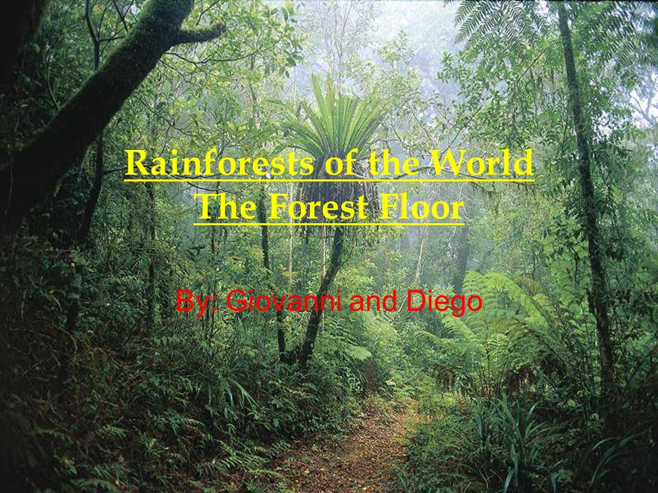 1 Rainforests Of The World The Forest Floor By: Giovanni And Diego