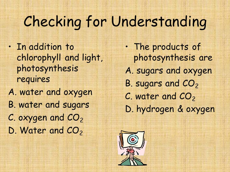 What plants do 6CO 2 + 6H 2 O  C 6 H 12 O 6 + 6O 2 Carbon dioxide plus water in the presence of sunlight yield sugars/carbohydrates and oxygen.