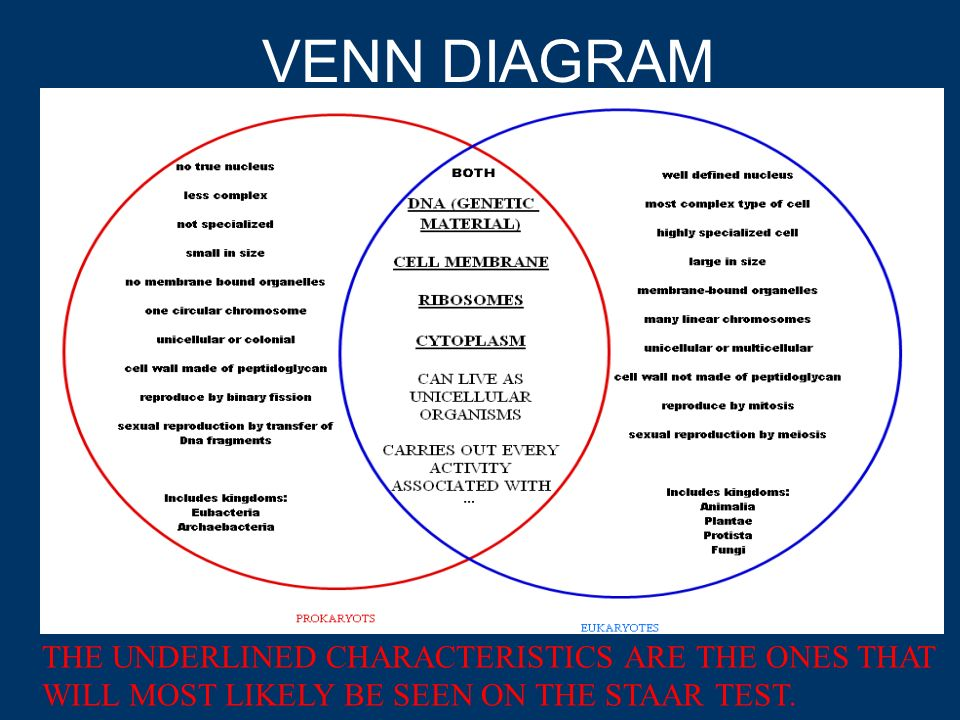 Unicellular And Multicellular Venn Diagram: Multicellular And Unicellular Organisms Worksheet At Alzheimers-prions.com