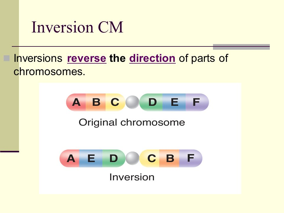 Inversion CM Inversions reverse the direction of parts of chromosomes.