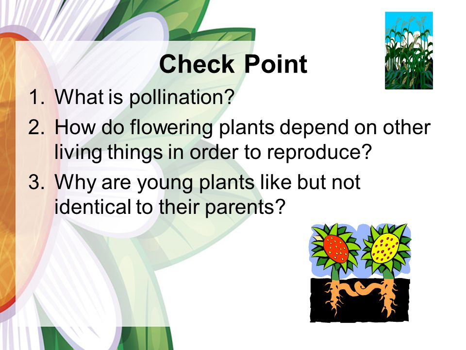 Check Point 1.What is pollination.