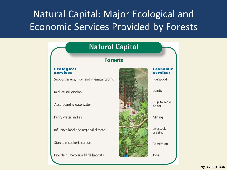 Natural Capital: Major Ecological and Economic Services Provided by Forests Fig. 10-4, p. 220