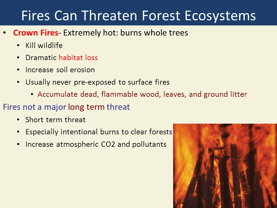 Fires Can Threaten Forest Ecosystems Crown Fires- Extremely hot: burns whole trees Kill wildlife Dramatic habitat loss Increase soil erosion Usually never pre-exposed to surface fires Accumulate dead, flammable wood, leaves, and ground litter Fires not a major long term threat Short term threat Especially intentional burns to clear forests Increase atmospheric CO2 and pollutants