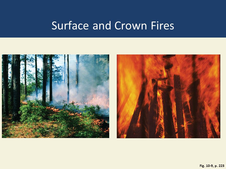 Surface and Crown Fires Fig. 10-9, p. 223