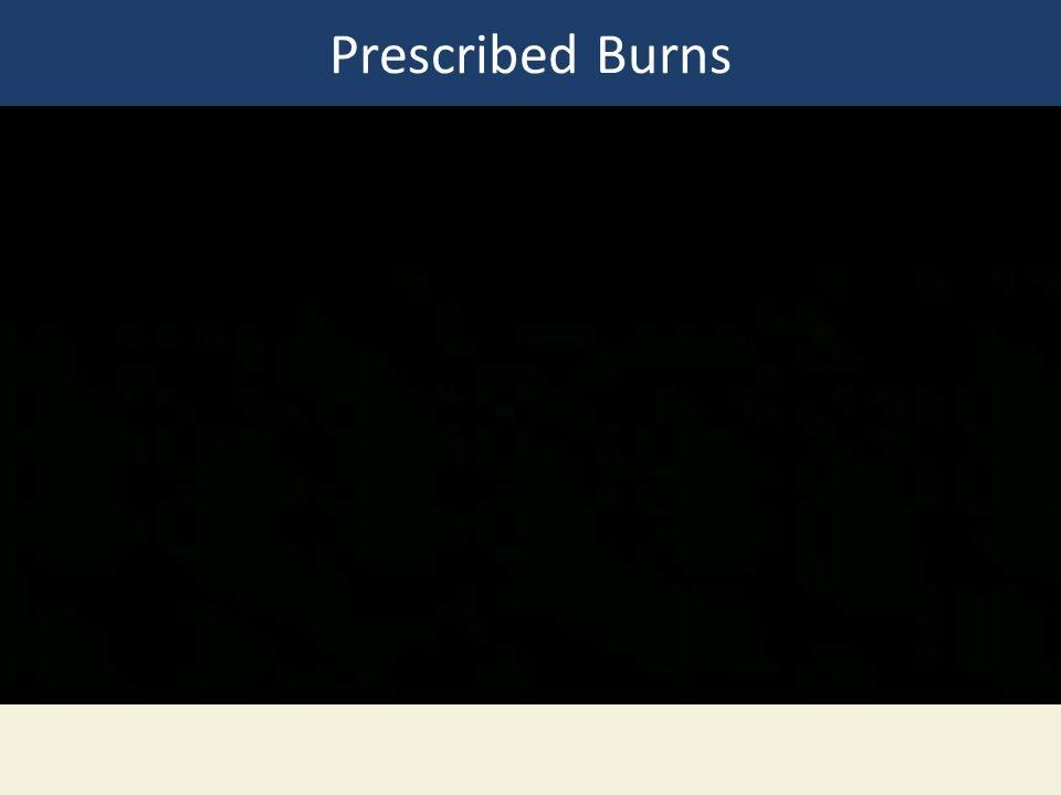 Prescribed Burns