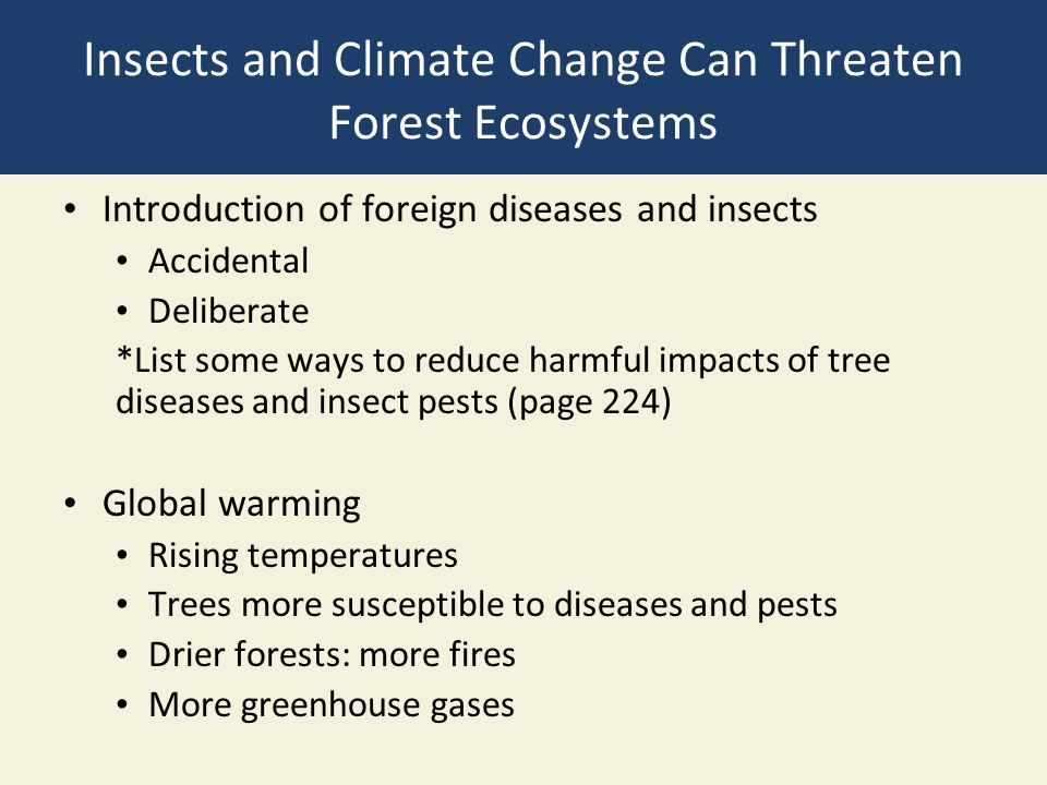 Insects and Climate Change Can Threaten Forest Ecosystems Introduction of foreign diseases and insects Accidental Deliberate *List some ways to reduce harmful impacts of tree diseases and insect pests (page 224) Global warming Rising temperatures Trees more susceptible to diseases and pests Drier forests: more fires More greenhouse gases