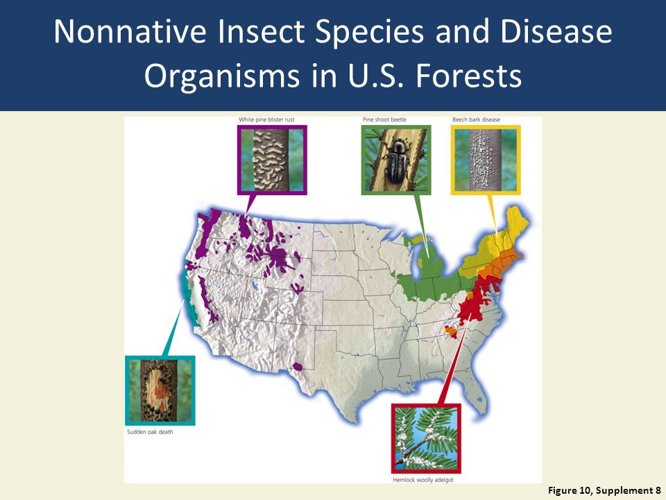 Nonnative Insect Species and Disease Organisms in U.S. Forests Figure 10, Supplement 8